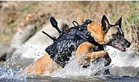 Dog-cairo